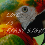 チキンコラム|LOVE is first Sight…